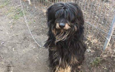 XX. kerületi kóbor kutya keresi eredeti gazdáját!